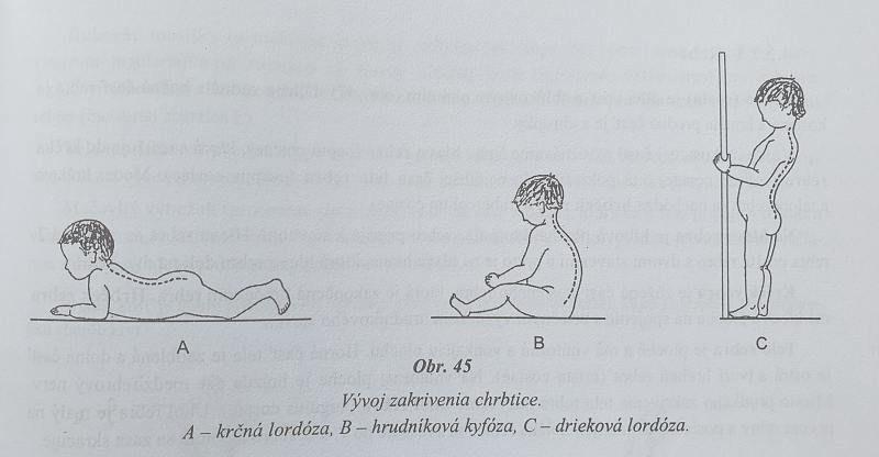 Vývoj zakrivenia chrbtice u dieťaťa