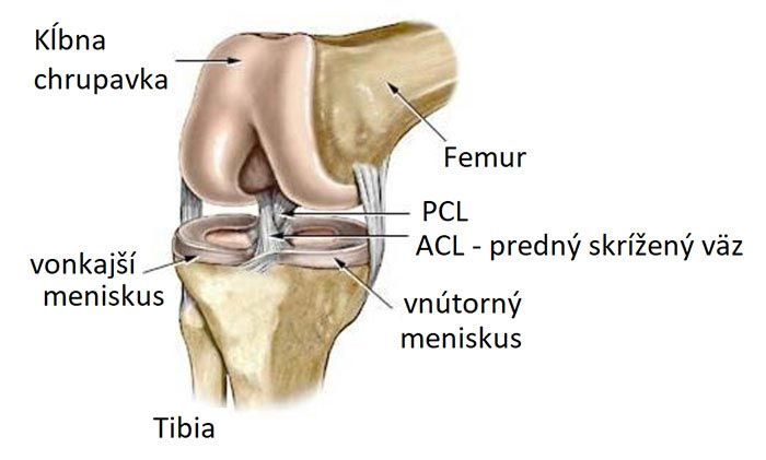 poranenie_menisku_anatomia_01